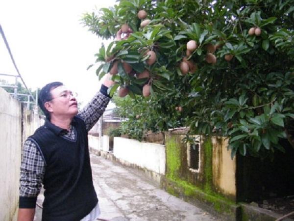 Bén duyên với đất, cây gì qua tay Trần Ngọc Hiếu cũng trĩu quả. T.Đ.