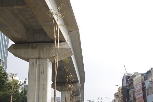Nhiều người dân lo ngại việc trồng cây như vậy trong vài năm tới liệu có ảnh hưởng đến hoạt động của tuyến đường sắt?