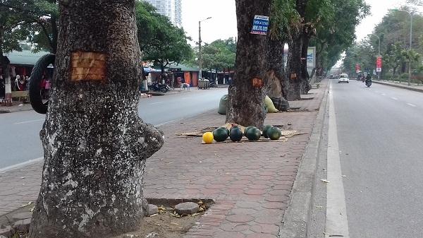Theo một số người dân ở đây cho biết, tình trạng này trước đây cũng có nhưng ít, lần này là nhiều nhất.Tình trạng lột vỏ cây có thể diễn ra vào ban đêm vì ban ngày không ai dám mang dao ra chém vào cây như thế này.