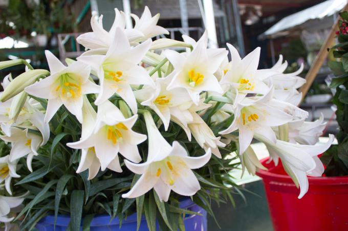 Về cuối tháng, những bông hoa càng to hơn, đẹp hơn.Tháng tư, tháng của thật nhiều kỷ niệm với mỗi người, bạn cũng như tôi, hãy trân trọng lưu giữ những giây phút ta đã từng đi qua để thêm yêu những ngày ta đang sống.