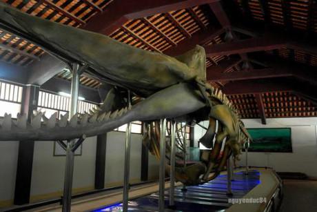 Bộ xương cá Voi từ năm 1963.