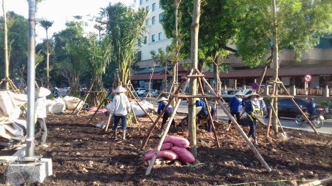 Các công nhân đang đổ đất trồng cây ven cầu.
