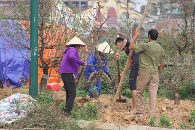 Công đoạn vận chuyển cây là một trong những công đoạn vứt vả nhất.