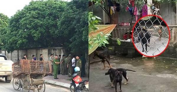 Đàn chó cắn bé trai 7 tuổi ở Hưng Yên bị công an bắt giữ.