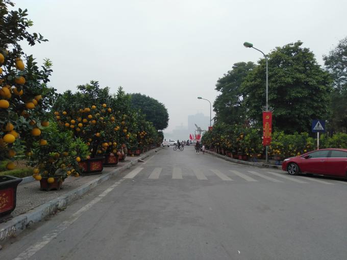 Những cây bưởi Diễn trĩu quả được người dân bày dọc hai bên đường Lạc Long Quân, đường Vệ Hồ (Tây Hồ, Hà Nội).