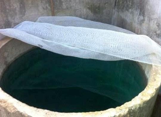 Bể nước ăn nhà chị Châu có màu xanh lạ thường
