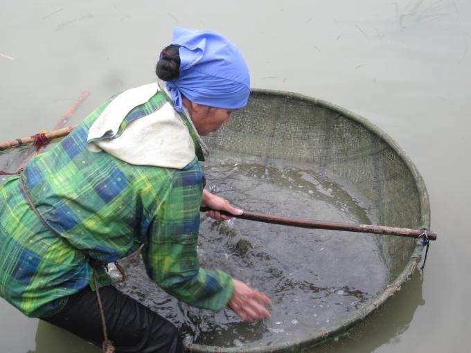 Một mẻ tép phải được đãi hàng tiếng đồng hồ để phân loại ốc và tép.