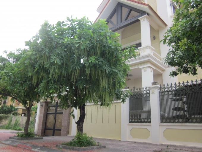 Ngôi biệt thự 3 mặt tiền này được trồng câu lộc vừng, hoa rơi đỏ vìa hè quanh nhà.