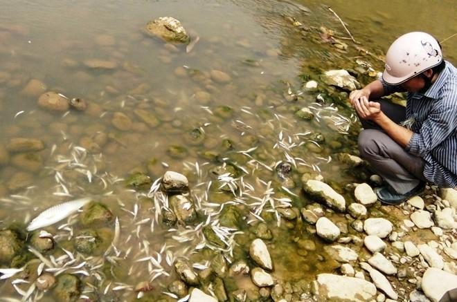 Cá tự nhiên chết trên sông Âm vào cuối tháng 7 vừa qua. Ảnh: T.L