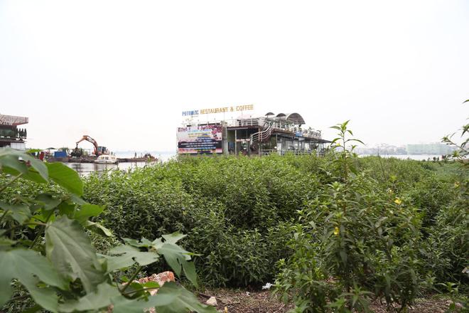 Cỏ mục um tùm ở khu vực bãi bồi ven đường Nguyễn Đình Thi.