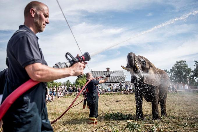 Lính cứu hỏa tắm mát cho voi. Ảnh: Reuters