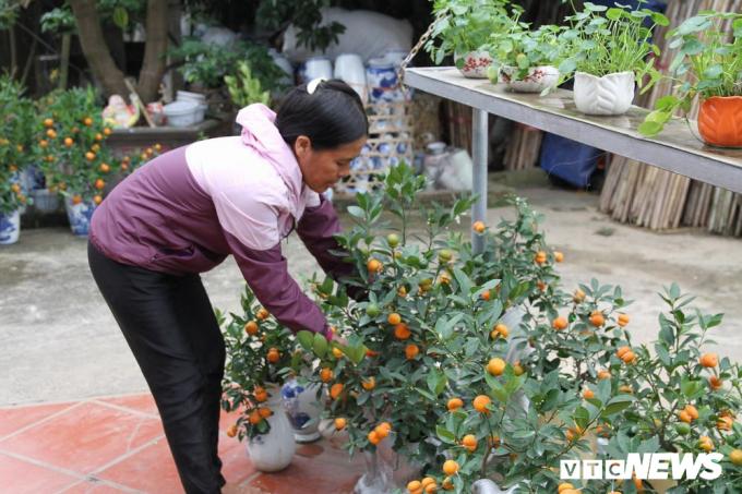 Theo bà Mai, nhiều lần xem trên tivi, thấy nông dân trong miền Tây cho ra mấy quả dừa, bưởi hình hồ lô nên cũng bắt chước làm theo.