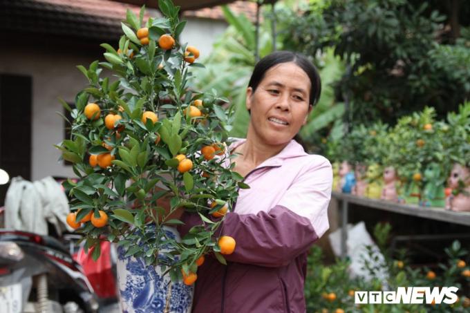 Bà Mai cho biết, gia đình bà đã làm những cây quất có quả độc đáo như vậy từ 3 năm nay, nhưng phải hai năm trở lại đây thì mới có nhiều hàng để bán ra thị trường.