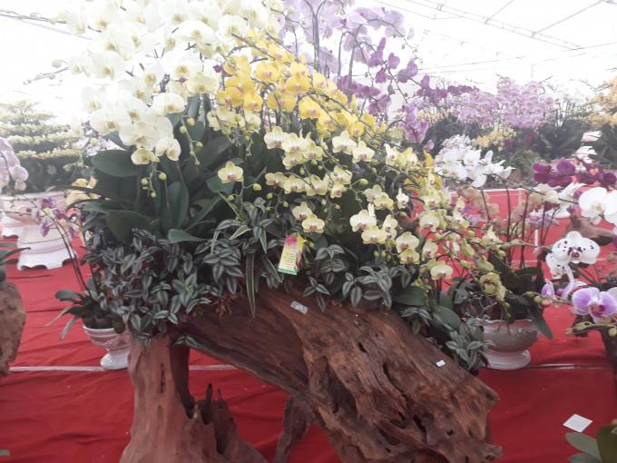 Tác phẩm hoa lan có gỗ, có hoa, cây xanh, đẹp như một bức tranh sinh động.