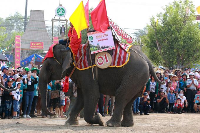 Những chú voi nhà rất hiền lành và thân thiện được người M' Nông nơi đây xem như một thành viên trong gia đình và cũng có tên gọi như các thành viên khác. (trong ảnh: Voi Khăm On đang nghiêng mình chào khách)