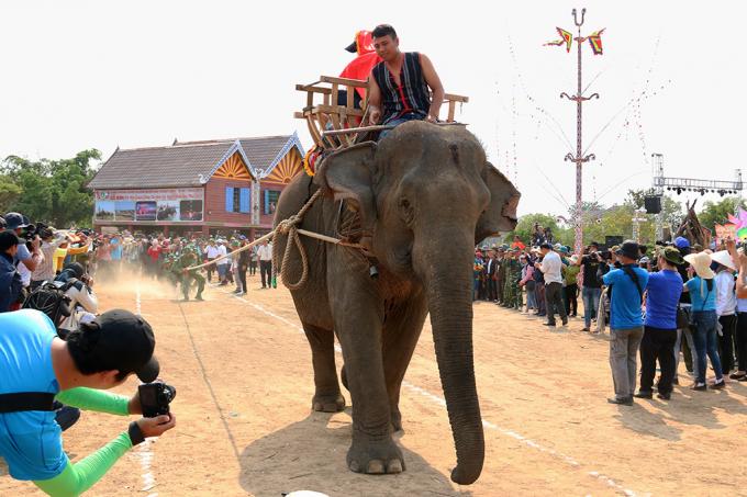 Với sức mạnh của mình, voi có thể gánh vác những công việc nặng nhọc trong gia đình như kéo gỗ, chở hàng … (trong ảnh: hơn 20 du khách thử sức bằng màn kéo co với voi H' Plóh)