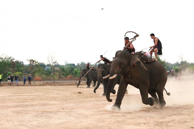 Huyện Buôn Đôn hiện là nơi có nhiều voi nhà nhất tỉnh Đắk Lắk và cũng là nơi có truyền thống săn bắt, thuẩn dưỡng voi rừng từ xa xưa (trong ảnh, các nài noi đang tái hiện cảnh săn bắt voi rừng với các dụng cụ truyền thống)