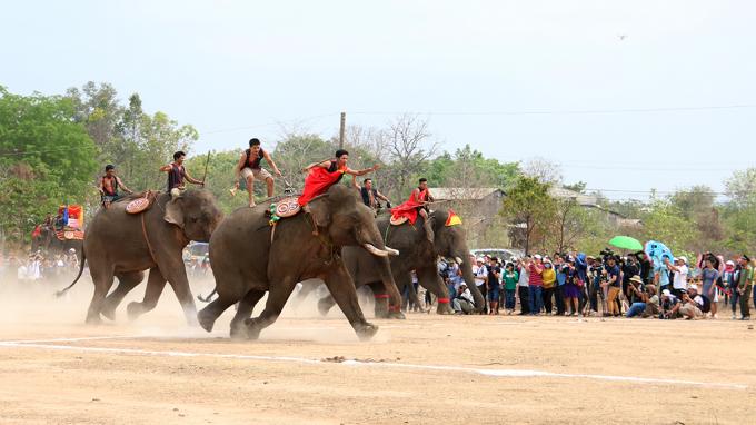 Đông đảo du khách đến với Hội voi Buôn Đôn đã rất hào hứng với phần thi chạy của các chú voi.