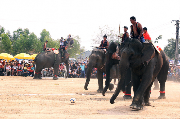 """Hấp dẫn không kém là phần tranh tài của các """"cầu thủ"""" voi trên sân bóng."""