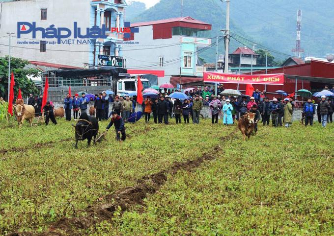 Lễ hội gồm cóHội thi bò khỏe, bò đẹp và Hội thi bò cày khỏe.