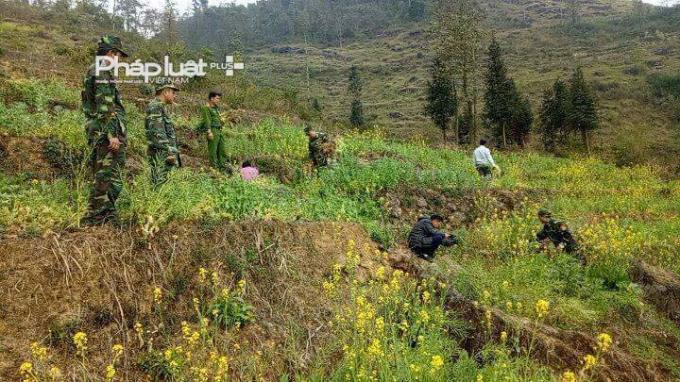 Đồn biên phòng Lũng Cú và lực lượng chức năng địa phương đang tổ chức nhổ cây thuốc phiện tại nương của gia đình ông Phứ.