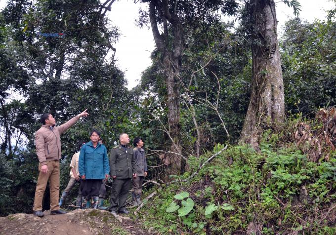 Hàng tuần các tổ bảo vệ rừng phânra các nhóm đi tuần.