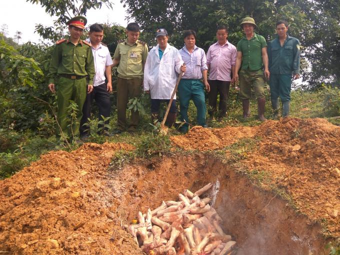 Trạm kiểm dịch động vật tại xã Hoa Thám (Nguyên Bình) tiêu hủy số thịt lợn đã thu giữ. (Ảnh: Baocaobang.vn).