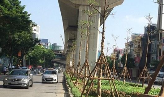 Cây Chiêu Liêu (Bàng Đài Loan) được trồng phía dưới tuyến đường sắt trên cao. (Ảnh: Internet)