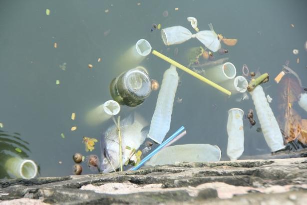 Nhiều người cho rằng ai đã đổ chúng xuống, một số khác lại cho rằng chúng theo công thoát chảy tới hồ Tây.