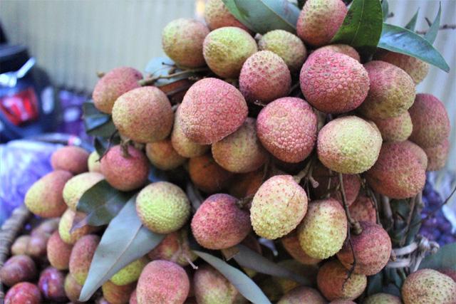 Vải đầu mùa nên quả còn to, chín không đều, hạt to và chưa được ngọt lắm. (Ảnh: Hồng Vân)