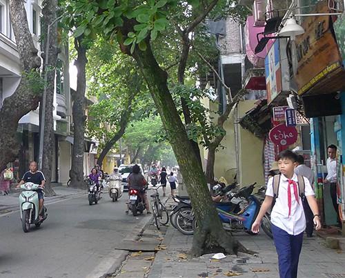 Trường Tiểu học Tràng An đóng cửa. Trên đường có một xe máy chở học sinh đi ngược chiều trên phố Nhà Thờ. Ngay tại ngã tư phố Nhà Chung - Nhà Thờ có biển cấm đi ngược chiều và có tổ bảo vệ chốt trực nhưng tình trạng xe vi phạm vẫn diễn ra.