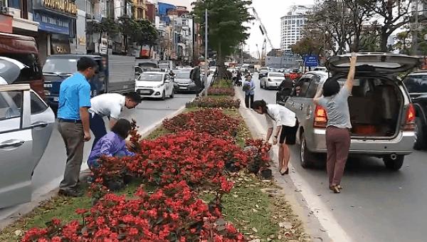 Cảnh người dân lấy hoa trên đường Kim Mã.
