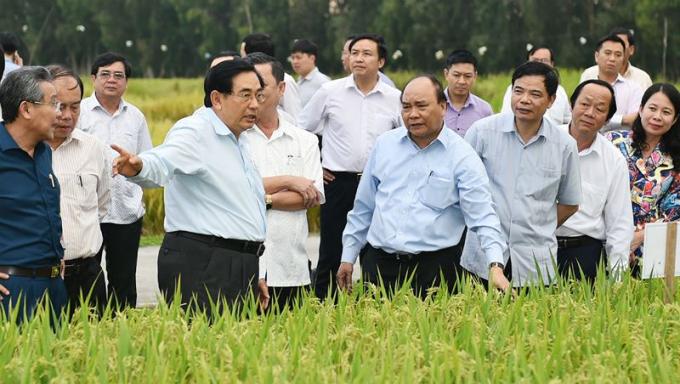 Thủ tướng Nguyễn Xuân Phúc thăm cánh đồng mẫu, trồng các giống lúa mới tại An Giang.
