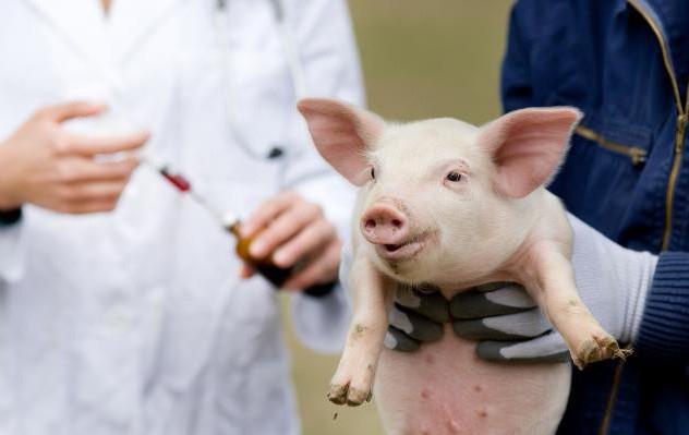 veterinarian-the-antibiotic-use-leader-15661809231741103493531-crop-1566180935510849327611