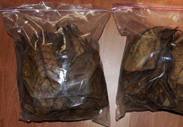 Lá bàng khô thường được người bán đóng vào từng túi, hút chân không và bán theo lô 10 hoặc 20 lá mỗi túi.