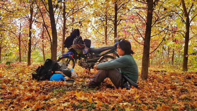 Phút nghỉ ngơi bên một cánh rừng mùa thu vàng ở Nga.