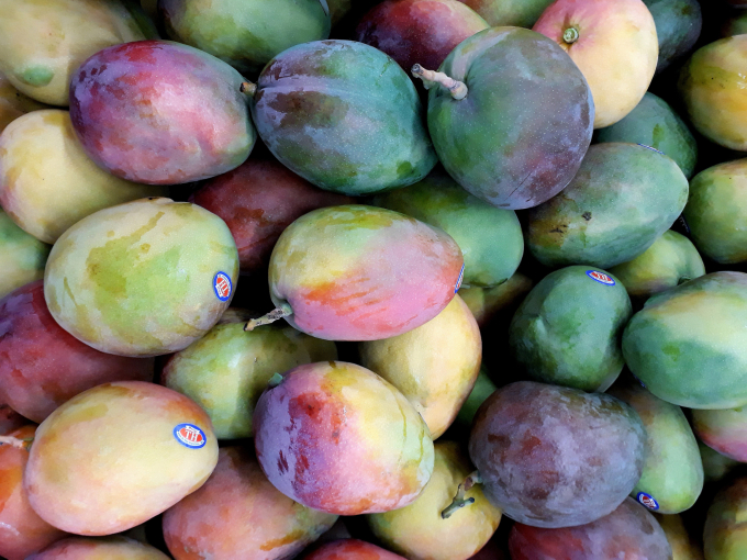 assorted-color-mangoes-2363345-15849335170351710816103