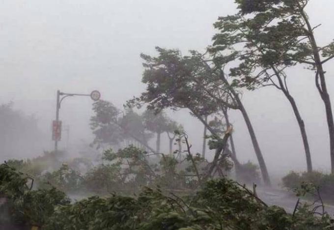 Sức gió giật cấp 12 đã khiến cây cố gãy đỗ xuống nhiều tuyến đường ở TP Đồng Hới.