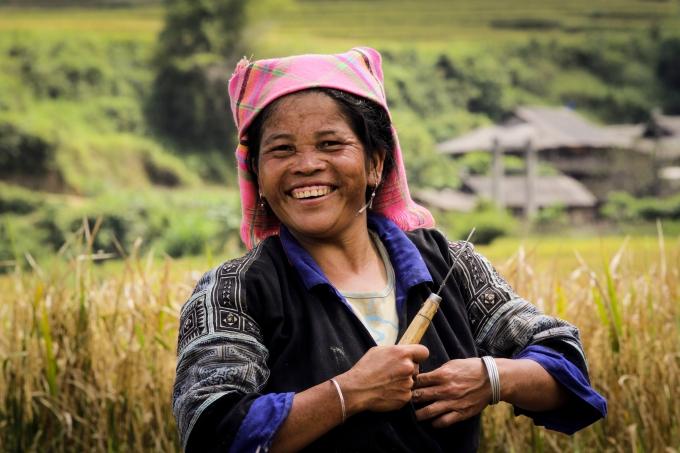 Nông dân ra đồng gặp lúa với niềm vui khi Tú Lệ năm nay được mùa. 1 ha ước tính sẽ thu hoạch được 1,5 tấn thóc.