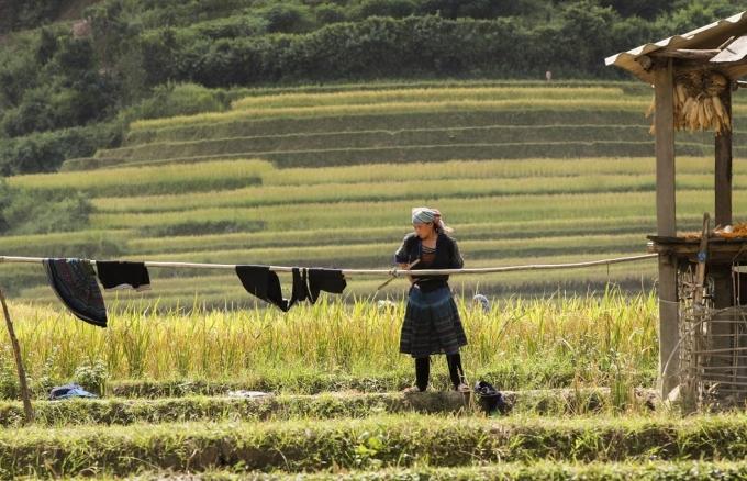 Nhà của những người nông dân nơi đây thường nằm ở gần đồng ruộng, điều đó thuận tiện cho việc thu hoạch lúa khi vào vụ.