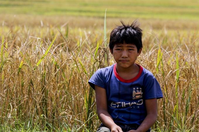 Trẻ em cũng ra đồng thăm gia gặt lúa cùng gia đình.