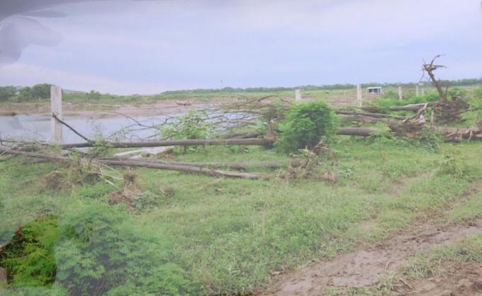 Một phần hiện trường cây bị phá hoại (ảnh do người dân cung cấp)