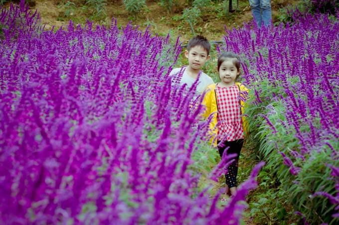 Những em nhỏ cũng được bố mẹ đưa ra vườn hoa chơi đùa. Ảnh: Nguyễn Thắng.