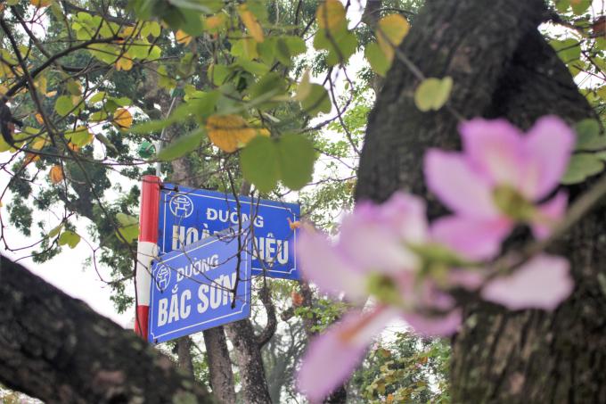 Có thể dễ dàng ngắm sắc hoa ban trên những đoạn đường Bắc Sơn, Hoàng Diệu, Điện Biên Phủ, Thanh Niên.
