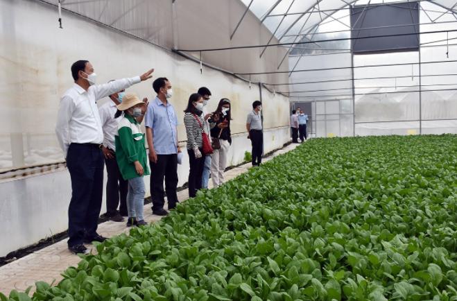 Chủ tịch UBND tỉnh - ông Nguyễn Văn Thọ, khảo sát tại trang trại trồng rau trong nhà kính của Công ty TNHH MTV 4K Farm