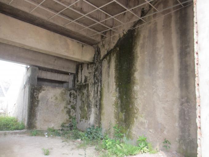Xuất hiện nhiều rêu xanh trên bờ tường