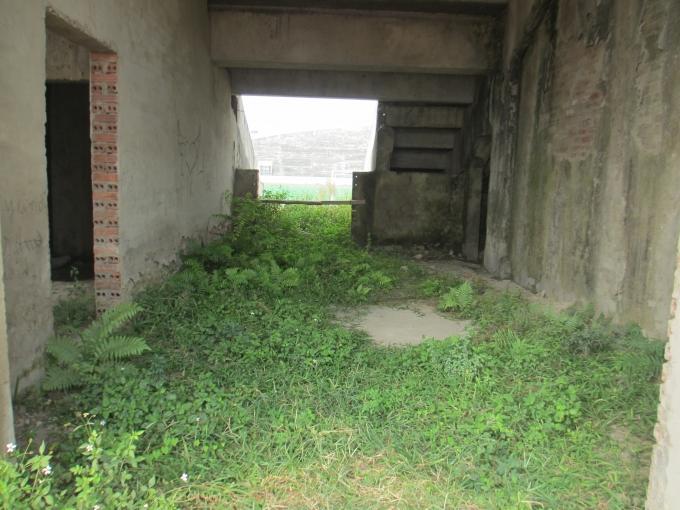 Cỏ mọc xanh um dưới nền nhà