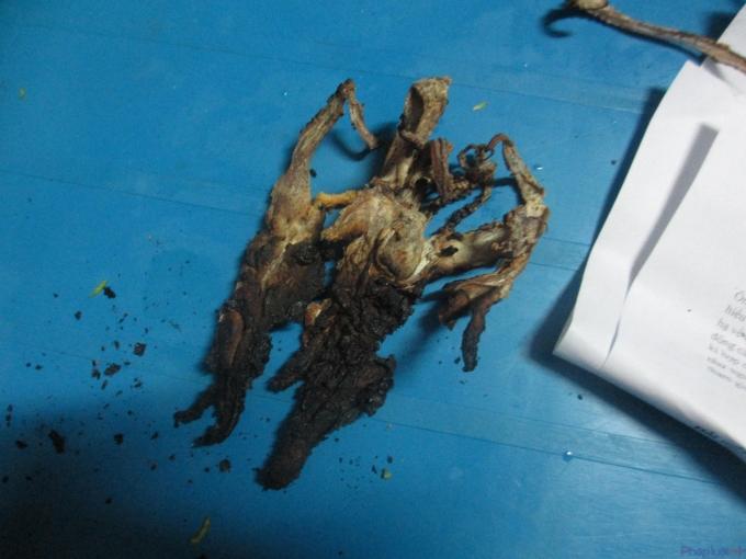 Miếng mực giả cháy đen sau khi đốt. (Ảnh: Thu Hường)