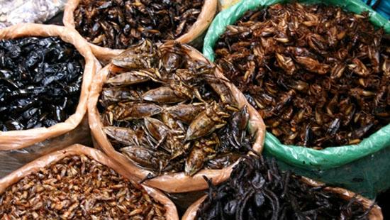 Ăn côn trùng có thể gây nguy hiểm đến tính mạng. (Ảnh: minh họa)
