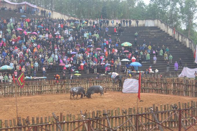 Hội chọi trâu Phù Ninh 2018 thu hút hàng nghìn du khách tham dự.